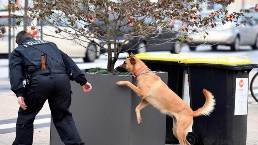 Polícia alemã usa cão farejador para verificar a segurança de área onde suspeitos estariam planejando ataque
