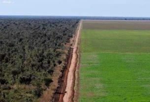 Avanço da fronteira agrícola pressiona o Cerrado
