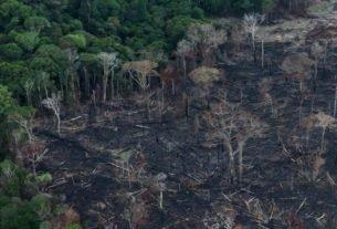 ista aérea de área desmarada da Amazônia em Itaituba, no Pará